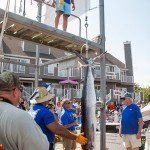 Large White Marlin hanging upside down at white marlin open 2015