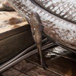 Small brown fish on the dock during white marlin open day