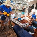 Four guys trying to get a white marlin off a boat during white marlin open 2015