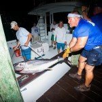 Tuna fish being taken off a boat at night time in Ocean City MD