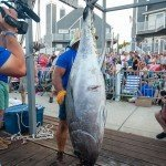Huge Tuna hanging upside down during White marlin open day in OC MD