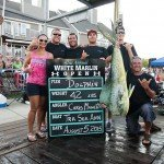 Mahi Mahi dolphin hanging with the crew of the Tra Sea Ann during white marlin open