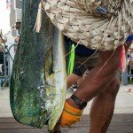 Staff member in a straw hat measuring the length of a mahi mahi for white marlin open 2015