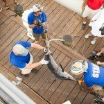 Two staff members hanging a marlin up while the third records it during white marlin open